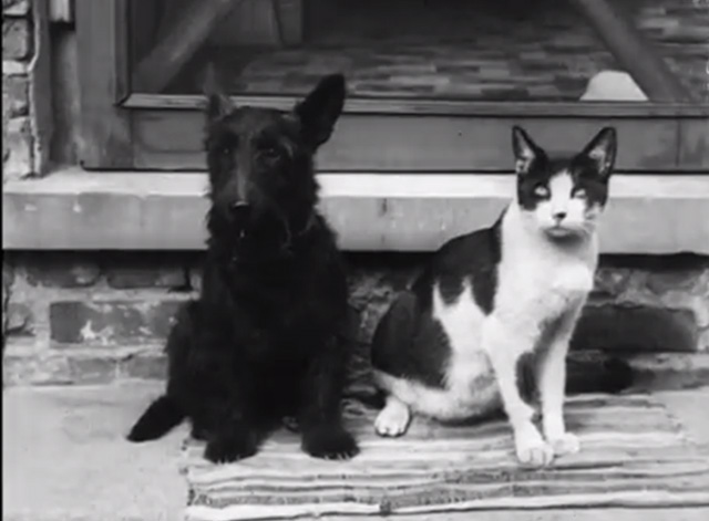 Cinetopicalities In Brief No. 139 - tuxedo cat and Scotty Dog sitting next to each other