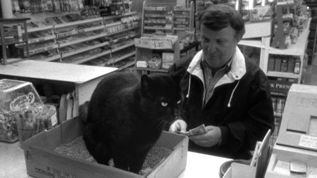 Clerks - black cat poops in litter box on counter in front of customer
