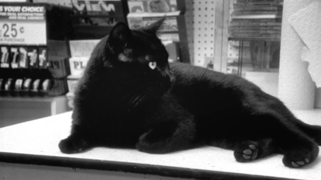 Clerks - black cat on shelf watches fight