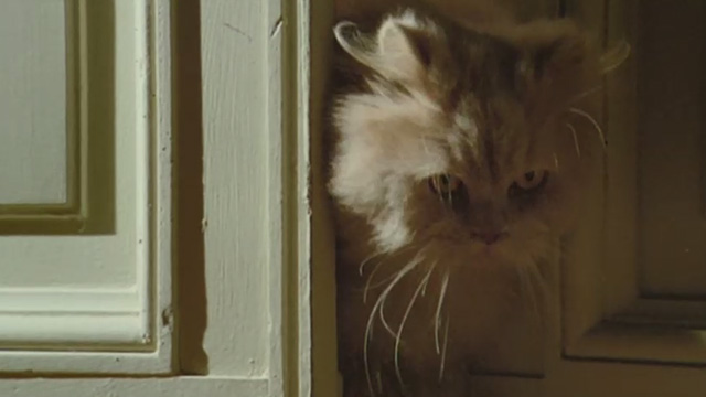 Cold Eyes of Fear - cream-colored long-haired cat trying to get through door that is cracked open