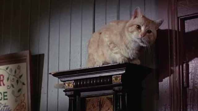 The Comedy of Terrors - Rhubarb Cleopatra ginger cat on top of clock