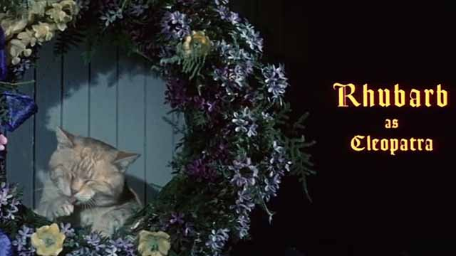 The Comedy of Terrors - Rhubarb Cleopatra ginger cat end credit as Cleopatra inside wreath