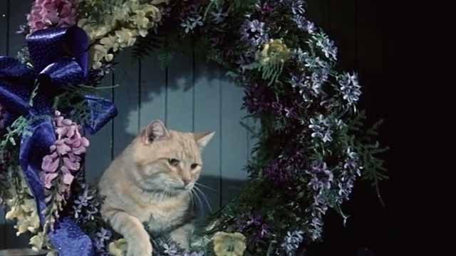 The Comedy of Terrors - Rhubarb Cleopatra ginger cat Rhubarb ginger cat end creditstepping out of wreath