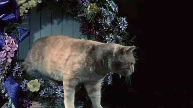 The Comedy of Terrors - Rhubarb Cleopatra ginger cat end credit stepping out of wreath