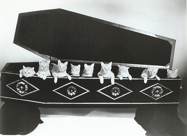 The Comedy of Terrors - Rhubarb Cleopatra ginger cats team nine cats in coffin publicity photo