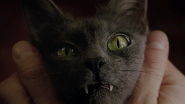 Constantine - close up of Russian Blue cat Duck's face