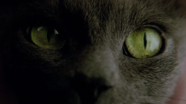 Constantine - close up of Russian Blue cat Duck's eyes