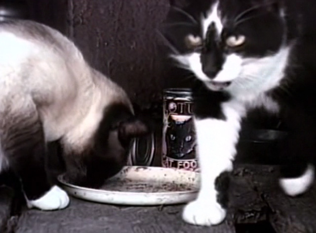 The Corpse Grinders 2 - tuxedo cat and Siamese eating Lotus Cat Food