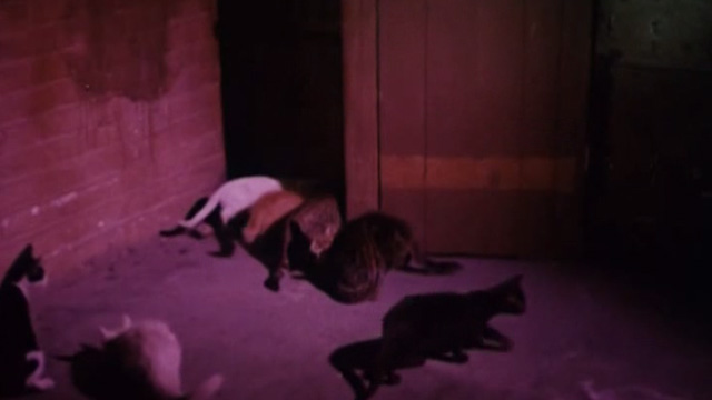 The Corpse Grinders - cats hanging around outside Lotus cat food company