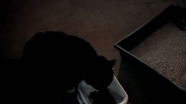 The Corpse Grinders 2 - tortoiseshell cat Mr. Beasley eating dry cat food