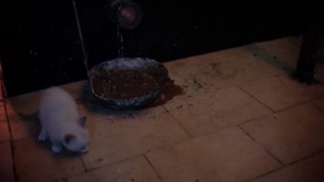 The Corpse Grinders 2 - Siamese kitten eating ground up meat