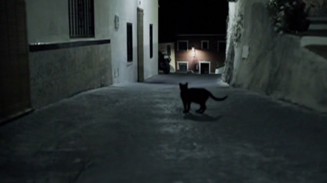 The Corpse Grinders 2 - black cat standing in street at night