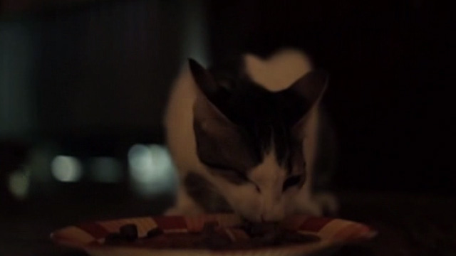 The Corpse Grinders 2 - one eyed cat eating cat food