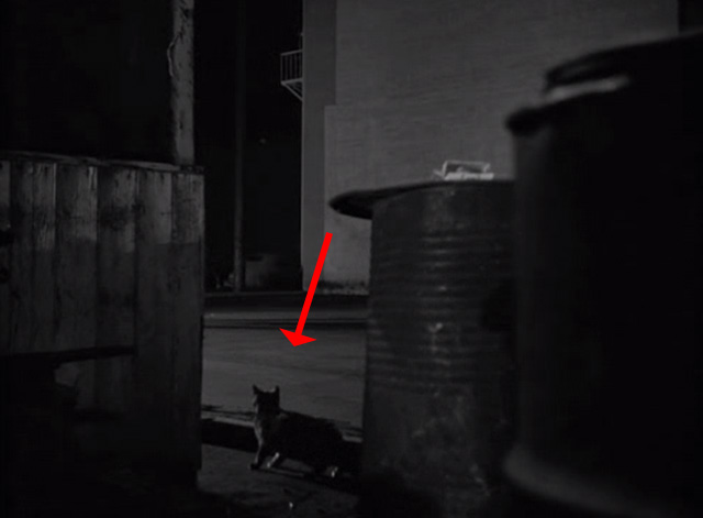 Crime Wave - cat between garbage cans