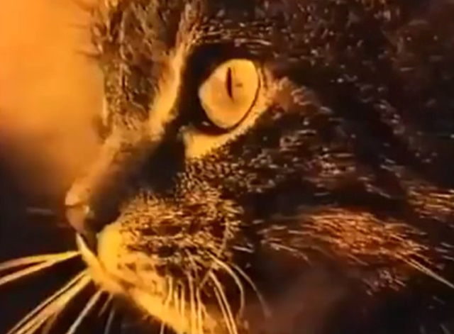 The Curious Female - close up of tabby cat