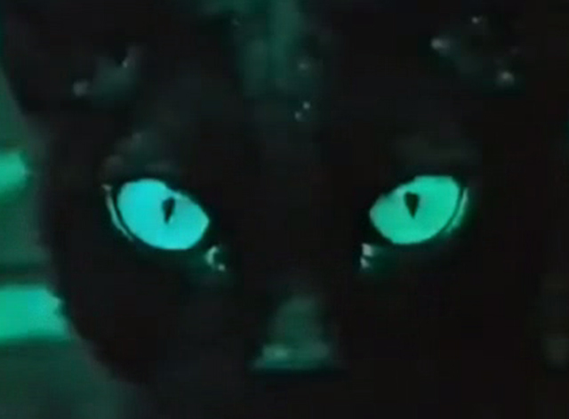The Curious Female - close up of black cat's yes