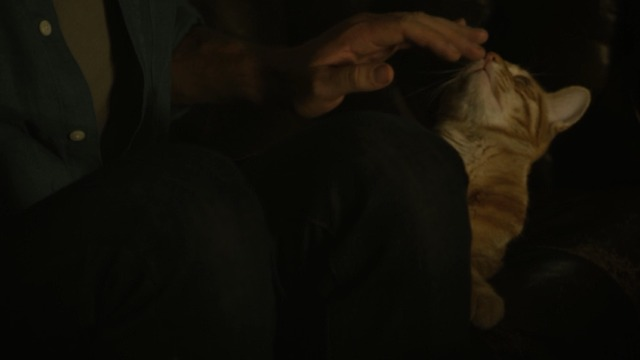 Dark Skies - orange tabby cat Dexter sniffing hand