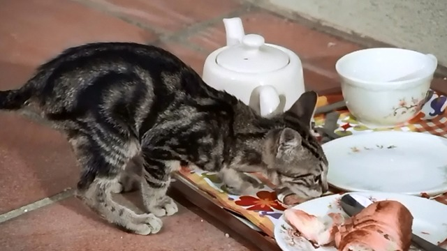 Day for Night - cat eating from tray