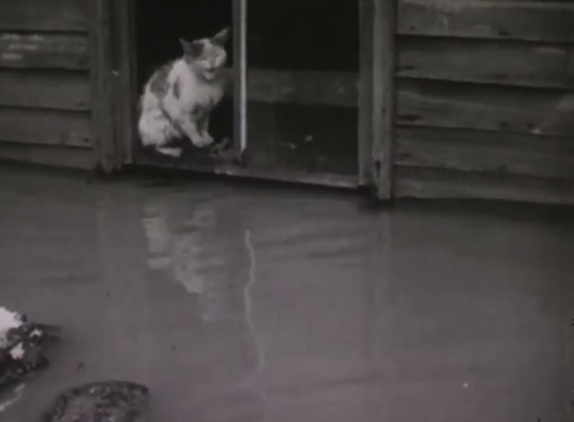 Disaster Strikes - calico cat on windowsill surrounded by flood waters