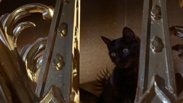 Doctor Faustus - black cat Mephistophilis looking down from above