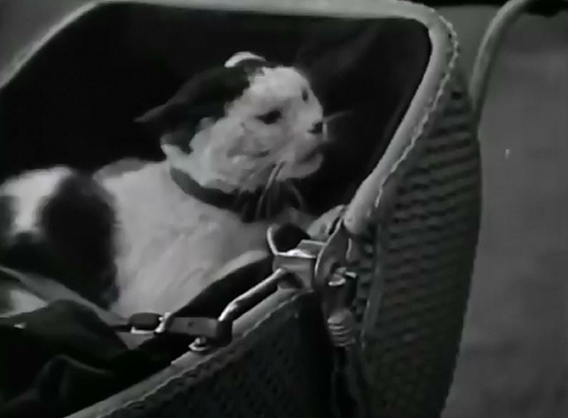 Our Gang - Dog Heaven - Gertrude cat in buggy angry