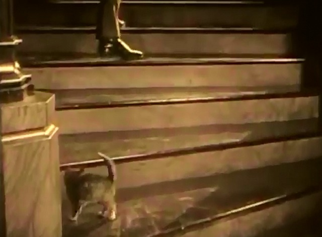 Charley Chase - Dog Shy kitten running up stairs