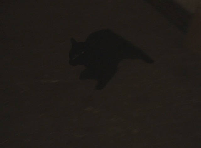 $ (Dollars) - black cat freaks out and runs around room