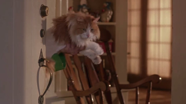 Drop Dead Fred - long-haired orange and white cat held up in doorway