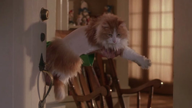 Drop Dead Fred - long-haired orange and white cat held up with middle shaved in doorway