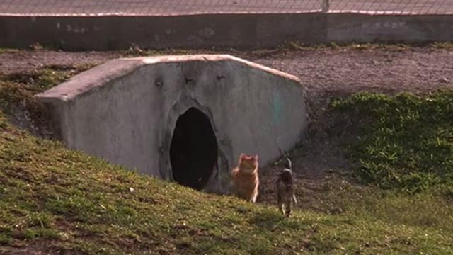 Drop Zone - long-haired orange tabby Buford and grey tabby kitten Betty running from culvert