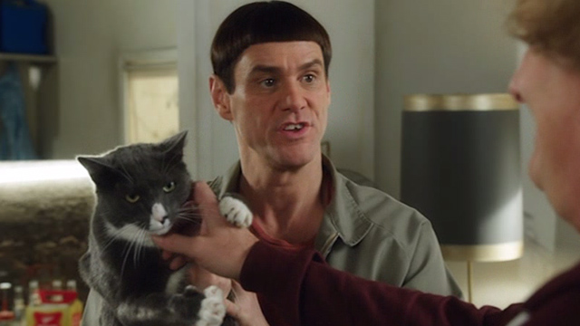 Dumb and Dumber To - Lloyd Jim Carrey holding grey and white cat Butthole