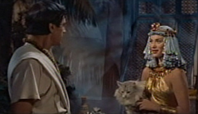 The Egyptian - Nefer holding silver Maine Coon cat