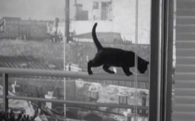 Elevator to the Gallows - black cat on railing outside window