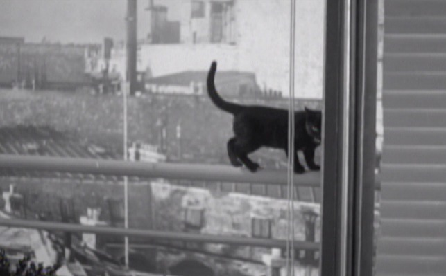 Elevator to the Gallows - black cat on railing outside window looking in