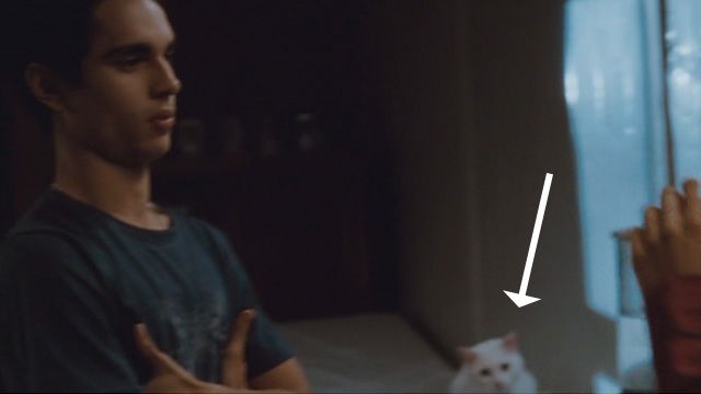 Elvis and Anabelle - white cat face behind Elvis Max Minghella