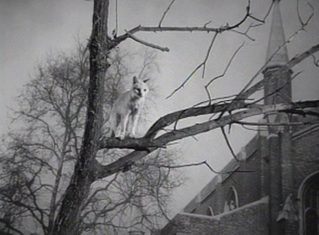 Enchantment - white cat stuck in tree