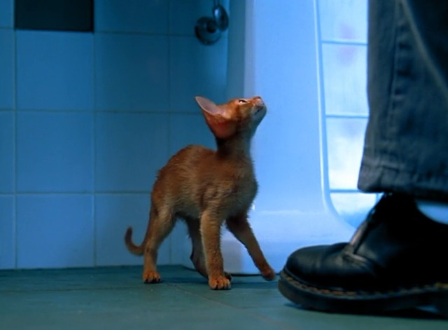 Entropy - Abyssinian Puddy Tat kitten on floor