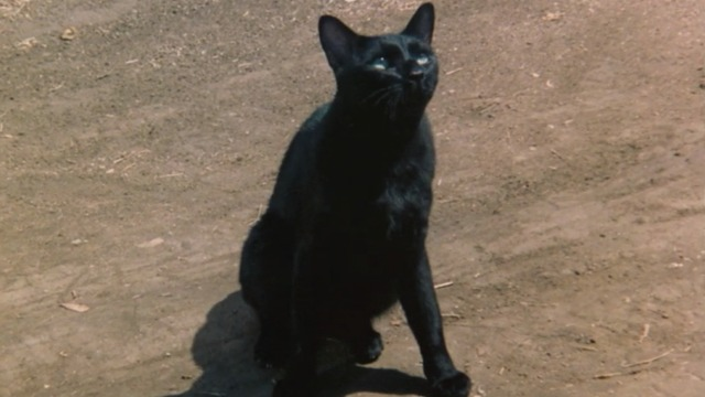 Escape to Witch Mountain - Winkie black cat looking up