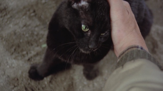 Escape to Witch Mountain - Winkie black cat being petted by O'Day