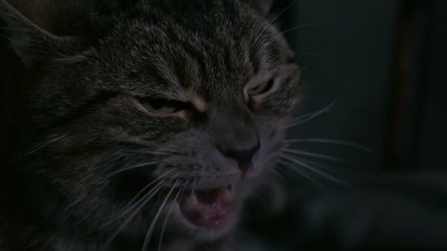 The Exorcism of Emily Rose - close up of tabby cat hissing