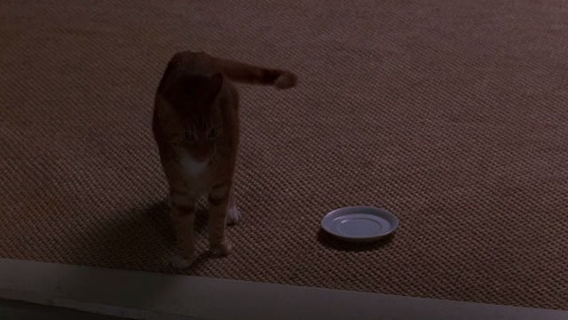 Fair Game - orange tabby cat standing by saucer on floor