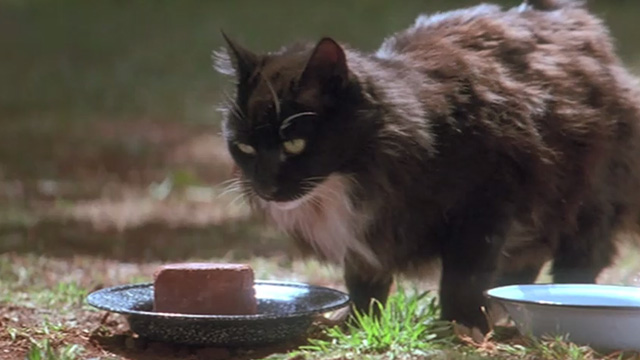 A Far Off Place - long-hair tuxedo cat sitting on ground by plate of food