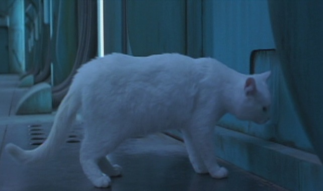 The Fifth Element - white cat Sweetie outside door