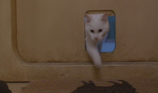 The Fifth Element - white cat Sweetie enters through cat door