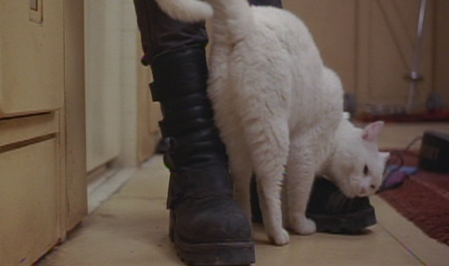 The Fifth Element - white cat Sweetie rubbing against boots