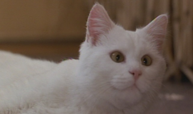 The Fifth Element - white cat Sweetie close up