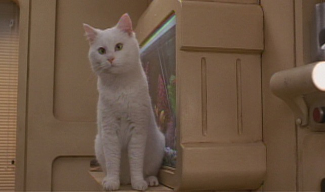 The Fifth Element - white cat Sweetie on counter