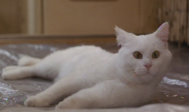 The Fifth Element - white cat Sweetie lying on bed