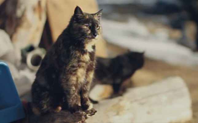 Finding Vivian Maier - cats on Minnesota farm