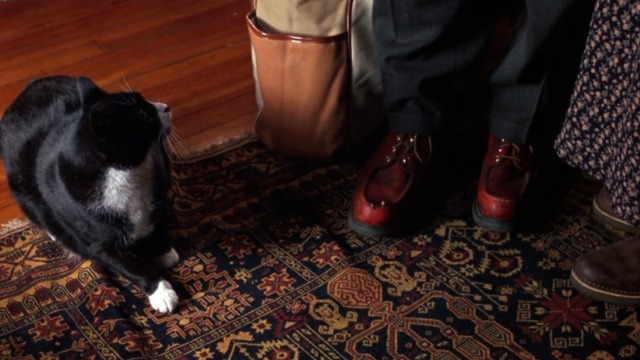 Flirting with Disaster - tuxedo cat hisses at Ben Stiller's foot